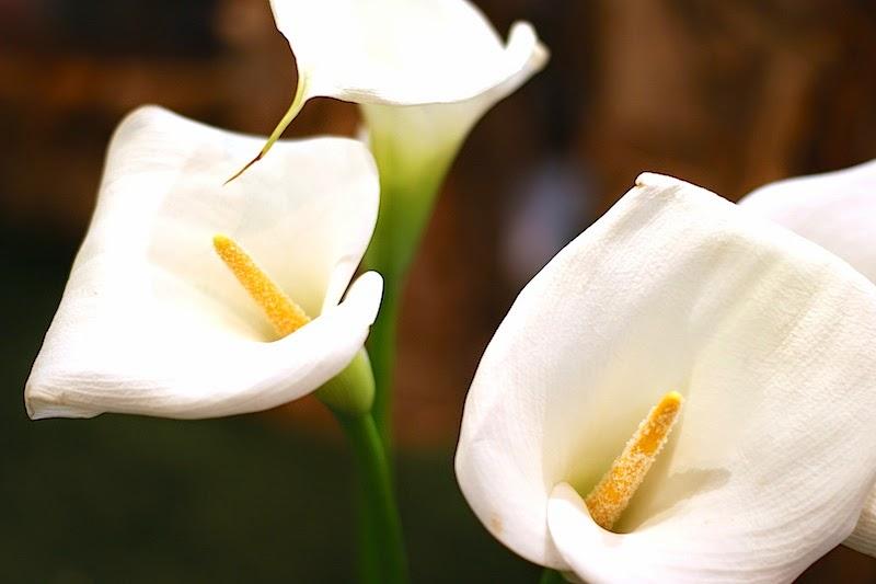 wenn lilien verblüht sind